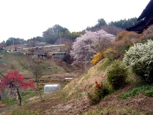 haru02.jpg
