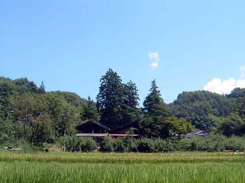 obayashi1.jpg