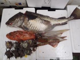 5鮮魚セット228
