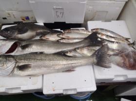 1鮮魚セット228