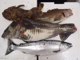 2鮮魚セット228