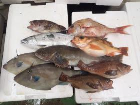 3鮮魚セット228