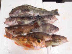 4鮮魚セット228