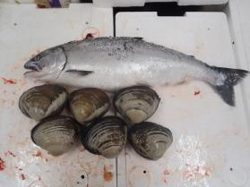 14鮮魚セット228