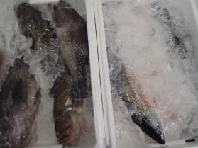 2鮮魚セット330