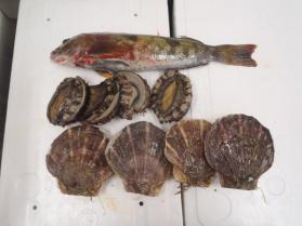 1鮮魚セット330