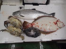 12鮮魚セット430