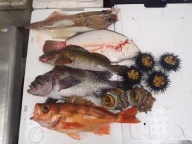 9鮮魚セット430