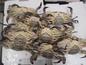 18渡り蟹430