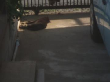 19-6679 車庫先端でひなたぼっこ横になるクロチビ 幅350
