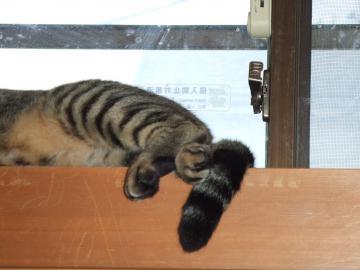 21-7678 ミオ、天窓の桟で寝る、足アップ
