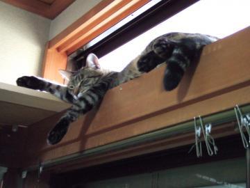 21-7680 ミオ、天窓の桟で寝る、下からアップ