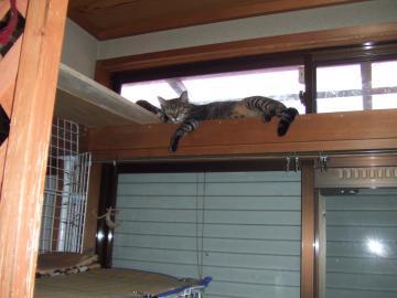 21-7671 ミオ、天窓の桟で寝る。遠目