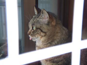 20-7447チー舌出し、窓から外見る