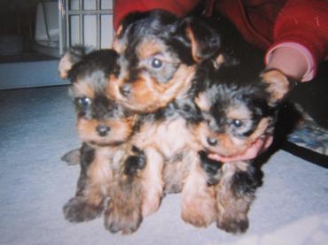 クララ、3姉妹、赤ちゃんの時 幅350