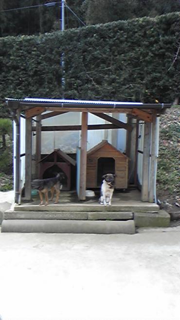 携帯00016 田舎犬、大人、犬小屋 幅350
