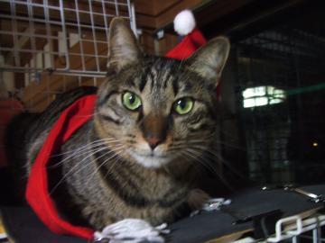 18-6242 レオ クリスマス マフラーと帽子◎