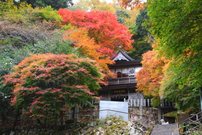 青倉神社6