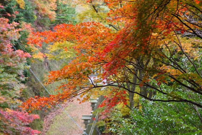 青倉神社7