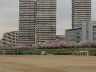 桜20130323‐3
