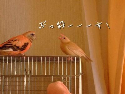 11_20121213103834.jpg