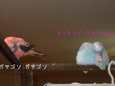 11_20130101150026.jpg