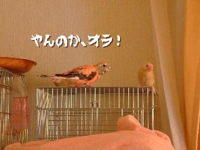12_20121213103835.jpg