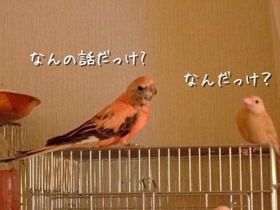 13_20121213105432.jpg