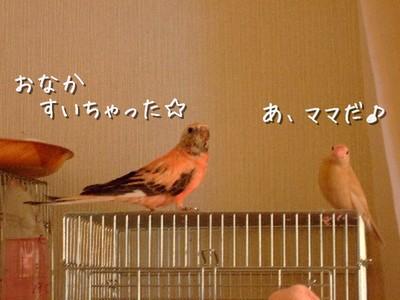 14_20121213105431.jpg