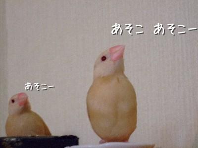 17_20121221114640.jpg