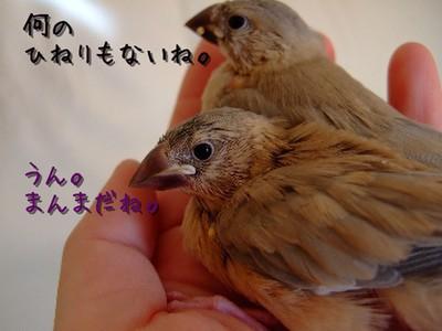 18_20121213100723.jpg