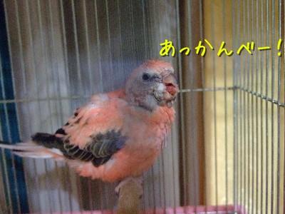 1_20121205225822.jpg