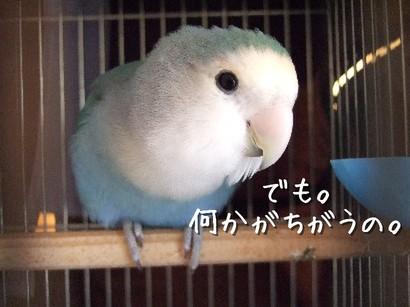 23_20120522140321.jpg
