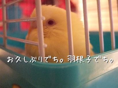 3_20120511085311.jpg