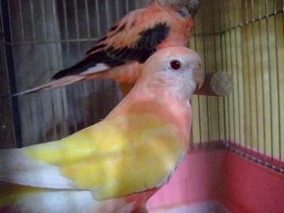 3_20121205225422.jpg