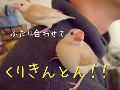 5_20121130103836.jpg