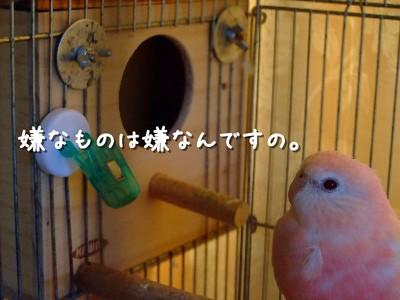 7_20120730154308.jpg