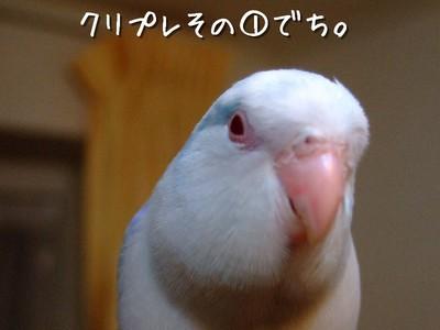 7_20121229144226.jpg