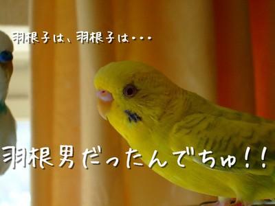 8_20121008204609.jpg