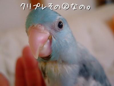 8_20121229144225.jpg