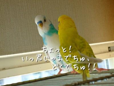 9_20121008204609.jpg