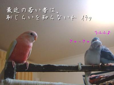 9_20130101145519.jpg