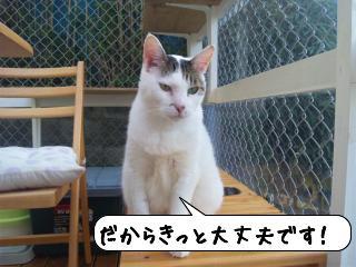 めっせーじ4