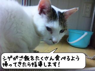 めっせーじ5