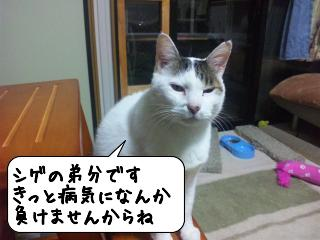 めっせーじ6
