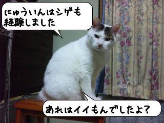 めっせーじ2