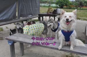06.03愛ハス7