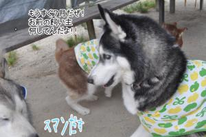 06.03愛ハス14