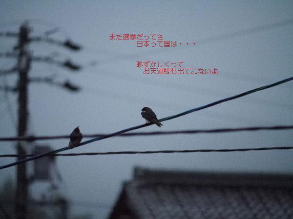 雀たちの会話
