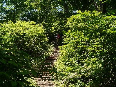 登山道階段
